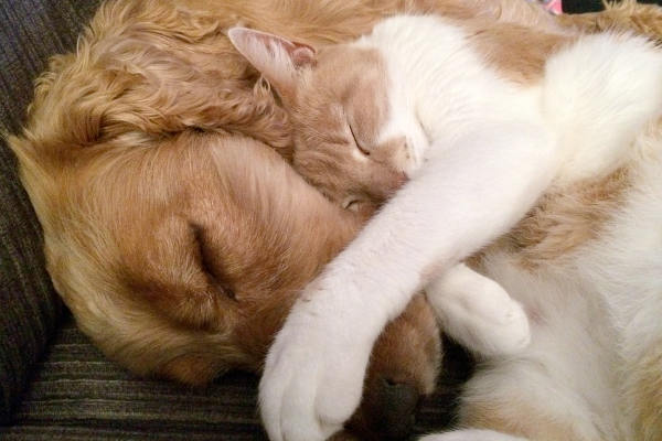 Dog and cat cuddle together